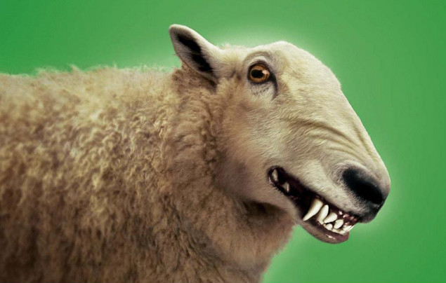 wolf-sheeps-clothing1