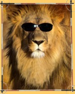 Lion, King with sunglasses