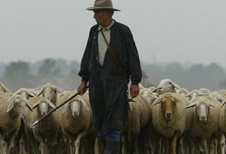 Shepherd with his rod