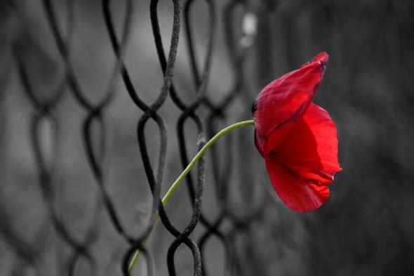 freedom_by_ahmetorhan