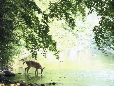 deer-1 (1)
