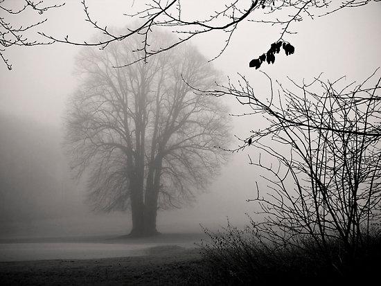 melancholy-tree