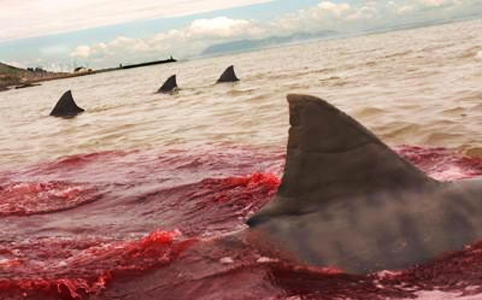 Blood In The Water Broken Believers