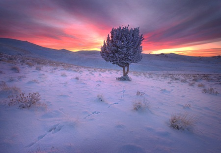 chosen-one-wintery