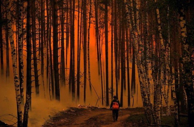 forest-fire1
