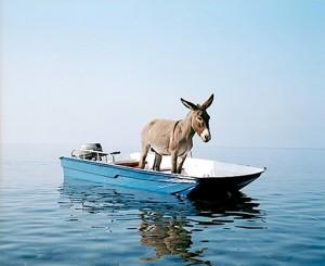 donkey_boat-300x245
