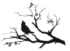 silhouette-bird-on-branch-granger
