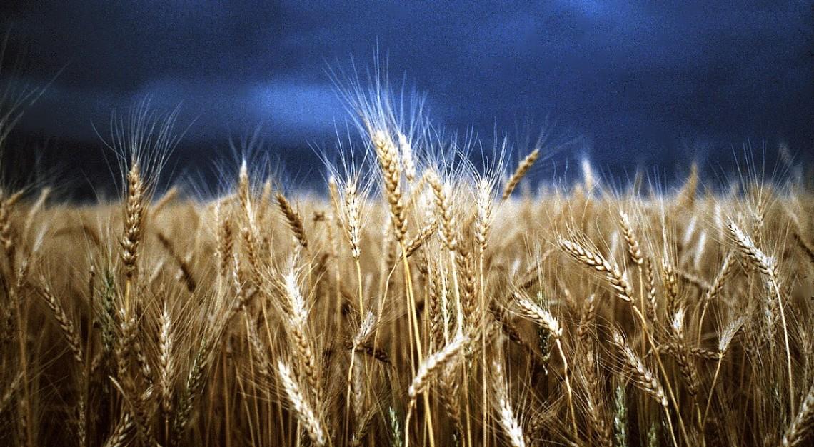 Eye+Fetch+Photography+Stormy+Wheat+Fields+by+Diane+Loft (1)