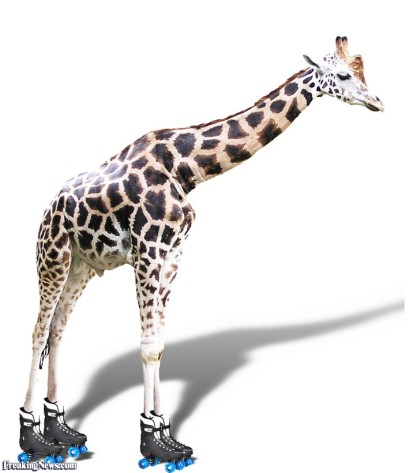 Giraffe-on-Roller-Skates