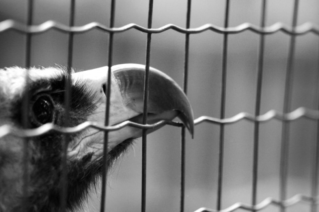 Escaping Like a Caged Bird– Psalm124